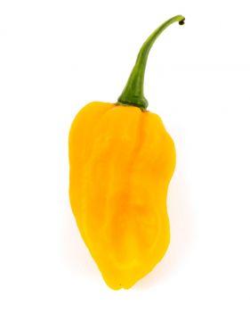 فلفل هابانيرو أصفر